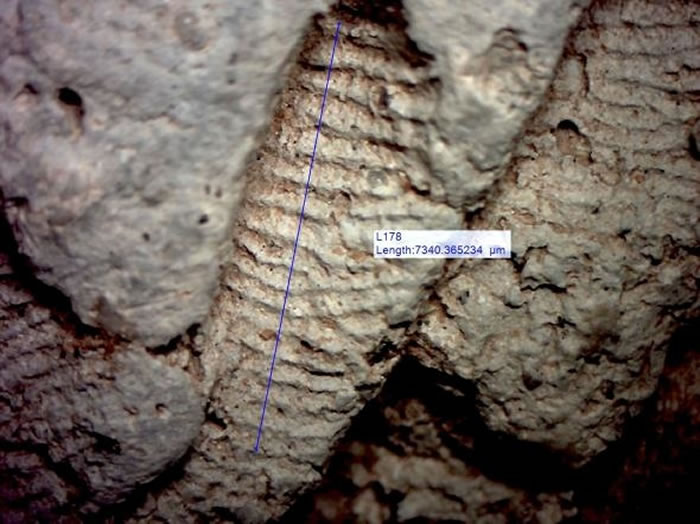 研究人员分析了陶器制作者留在器皿上的指纹纹脊(ridge)宽度;男性的纹脊(本图)通常比女性(下)来的宽。 PHOTOGRAPH BY JOHN KANTNER