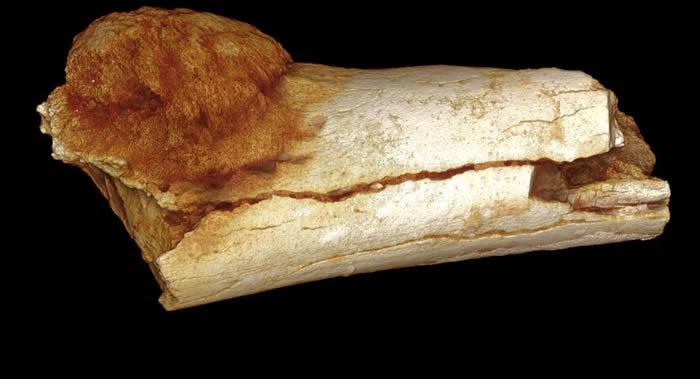 埃塞俄比亚阿瓦什低谷发现最古老的直立行走南方古猿遗骸