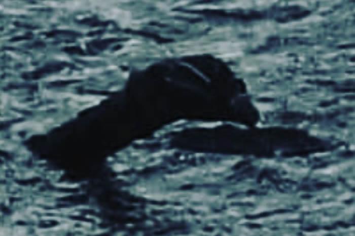 """研究发现尼斯湖水怪可能真实存在 """"水怪""""究竟是什么东西?"""