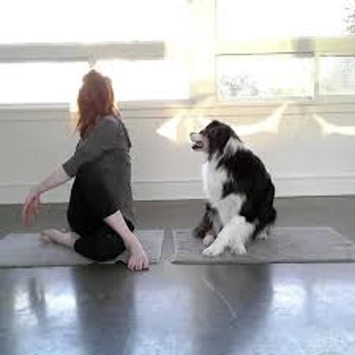 Mary与Secret一起做瑜伽。