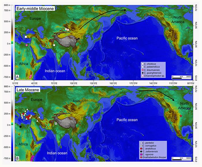 豕脊齿象类在中新世的分布位置以及洲际之间迁移示意图 (A, 早—中中新世;B, 晚中新世)(李春晓 供图)