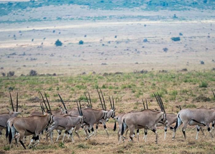 羚羊也在政府出售动物之列。