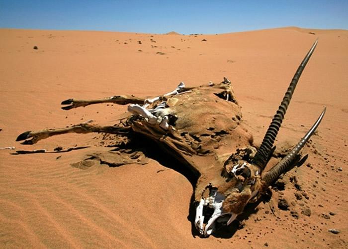 干旱天气令不少动物死亡。