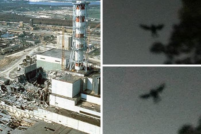 """""""切尔诺贝利黑鸟""""!切尔诺贝利核电站发生事故前曾出现""""神秘生物""""?"""