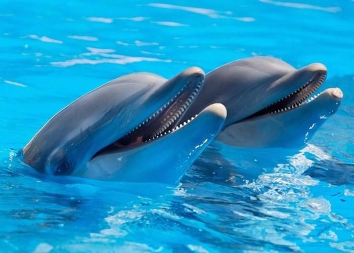 最新研究发现海豚喜欢选择与自己有同样兴趣爱好的同类做朋友