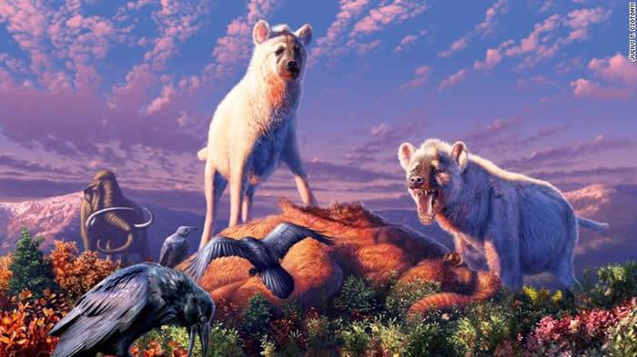 远古鬣狗生活在北极地区:加拿大北部发现牙齿化石属于已灭绝的豹鬣狗