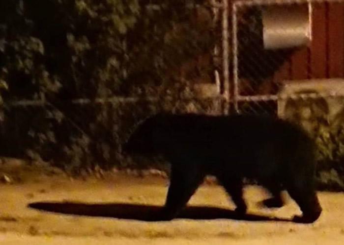 台湾台东县男子校外遇黑熊被吓呆 趁离开拍下珍贵背影