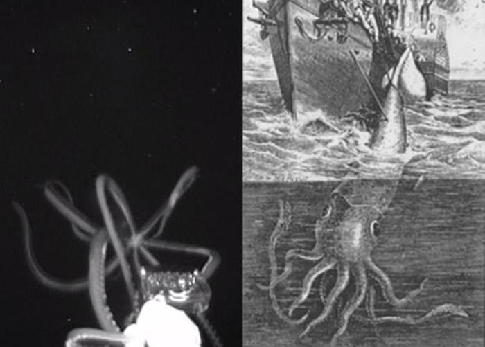美国国家海洋及大气总署深海考察队在墨西哥湾拍摄到深海巨乌贼 半小时后竟遭雷击