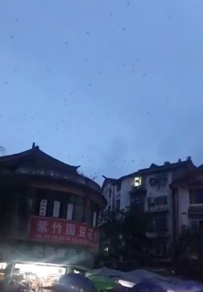 四川省宜宾市再发生地震 燕子成群飞舞惹网民忧虑