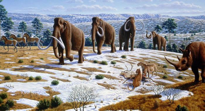 科学家发现在猛犸象复活时可生活的地方——俄罗斯西伯利亚