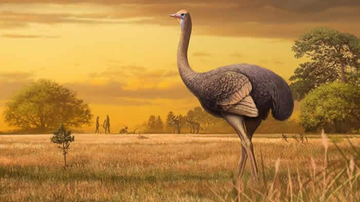 古人类首次抵达欧洲时可能与巨大鸟类一起生活