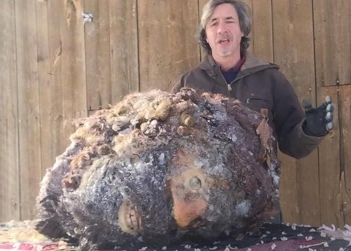 美国男子Peter Caine声称拥有大脚怪头颅