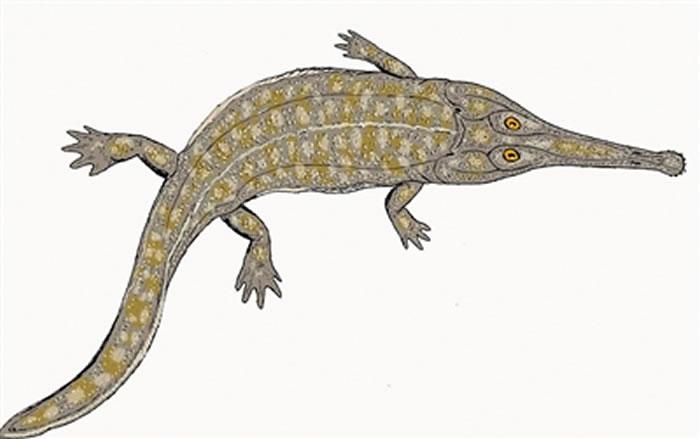 """中生代与恐龙同行的远古鳄形类动物有一些是""""素食主义者"""""""