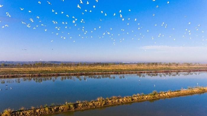 数以百万计的候鸟会途径该区域停歇。