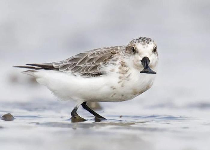 有大量珍稀鸟类在该区域栖息。