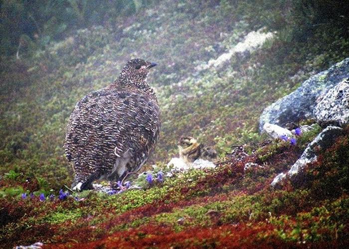 日本长野县阿尔卑斯山脉中部的木曾驹岳确认有