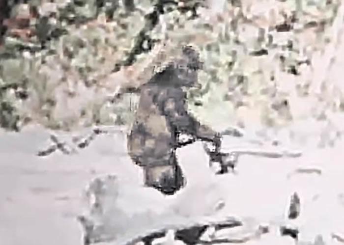 重新修复的1967年美国加州大脚怪经典影片显示大脚怪很可能是真实存在的
