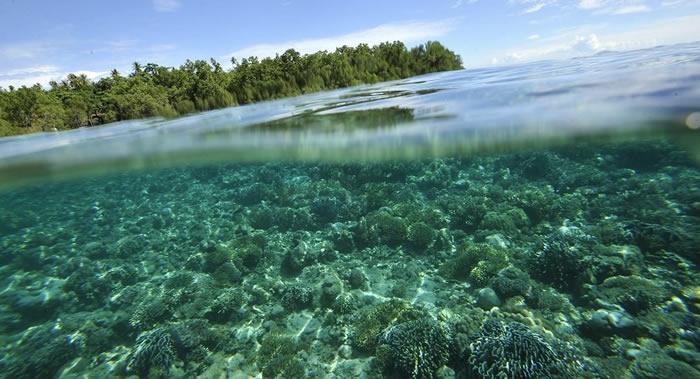 """气候变化和砍伐红树林:""""千岛之国""""印度尼西亚海岸侵蚀失去相当于首都雅加达的面积"""