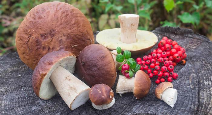 """蘑菇是维他命和营养物质的""""仓库"""" 对血管和神经系统产生积极影响还抗癌"""