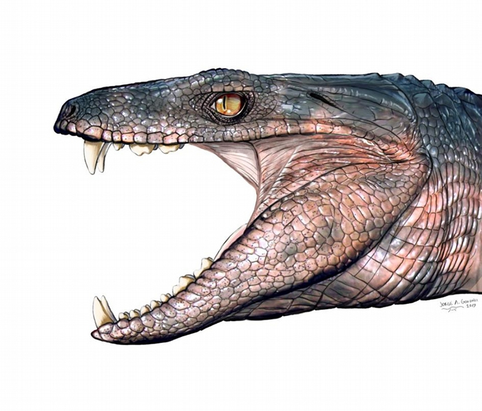 恐龙时代的鳄鱼也吃素