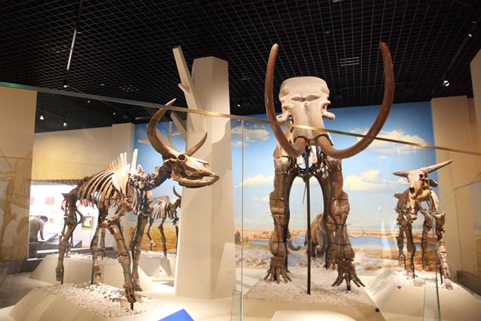 北京自然博物馆《古哺乳动物》大型专题展览正式对公众开放