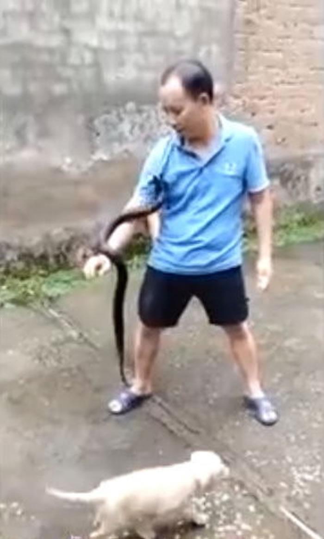 不作死就不会死:中年男子把玩眼镜蛇请朋友拍片上传 惨遭咬死