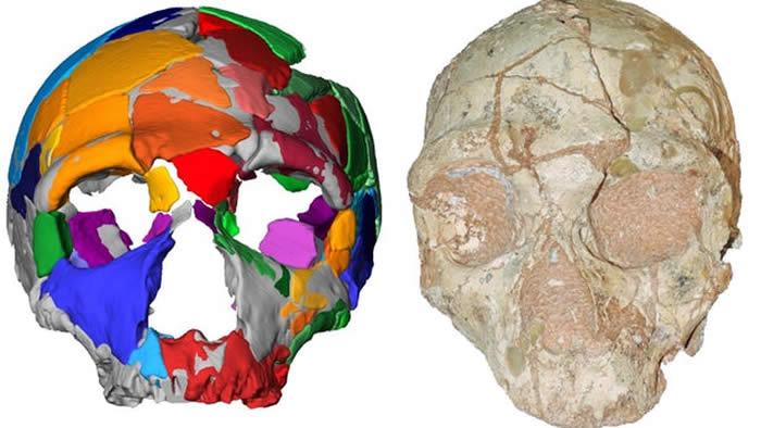 希腊洞穴中发现的人类头骨化石可能是欧洲最古老人类的遗骸