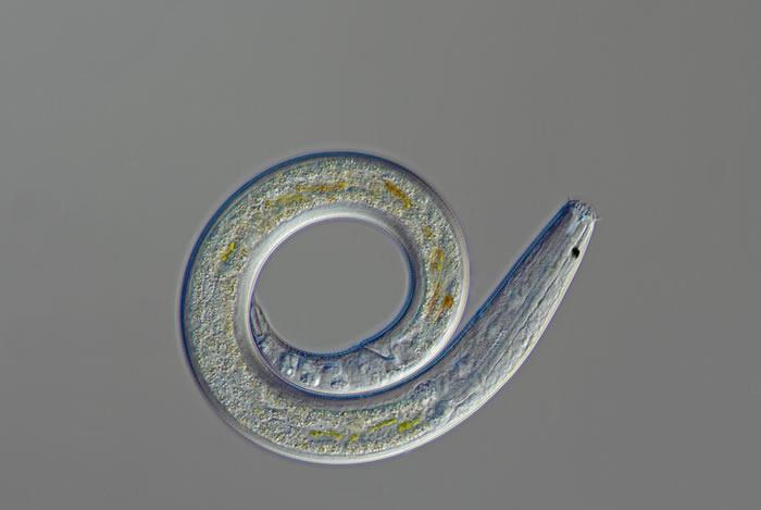 永冻层逐渐解冻 沉睡数万年的线虫正在复活