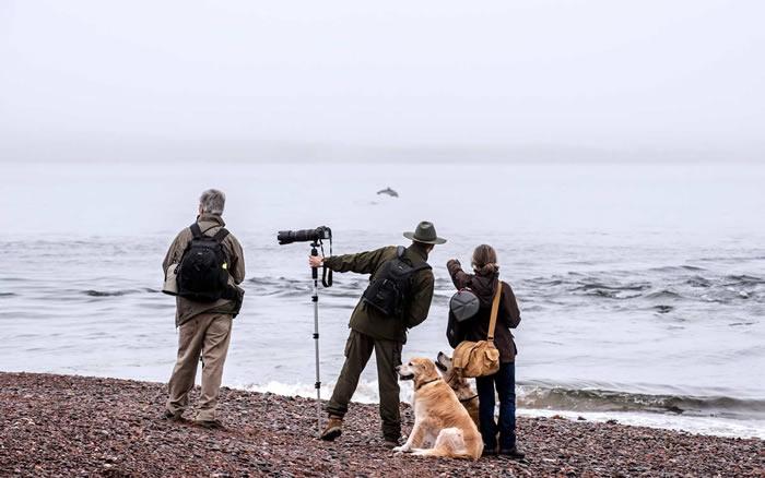 """苏格兰西部推出""""观鲸地图"""":标注30多个可以观察鲸鱼、海豚和鼠海豚的地点"""
