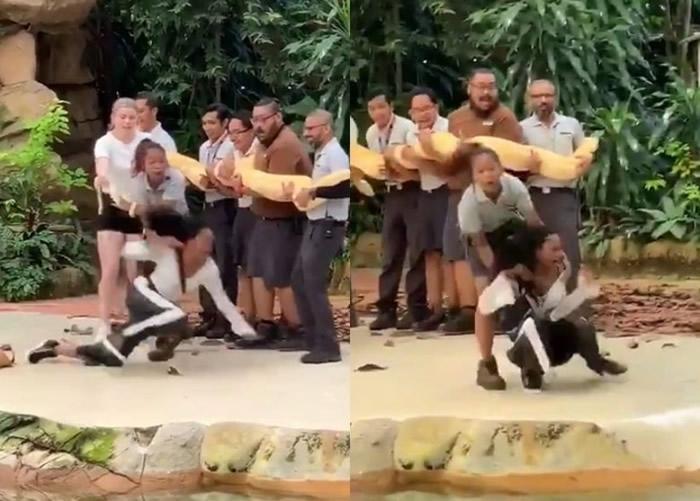 新加坡动物园举办与巨蟒亲密接触活动 女子被吓至花容失色