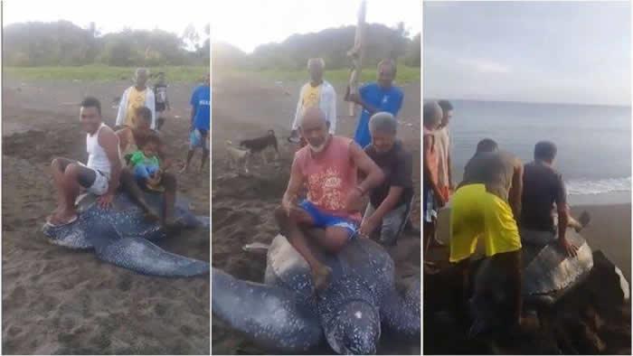 印尼濒危棱皮龟上岸产蛋 惨遭民众轮流骑乘嬉戏