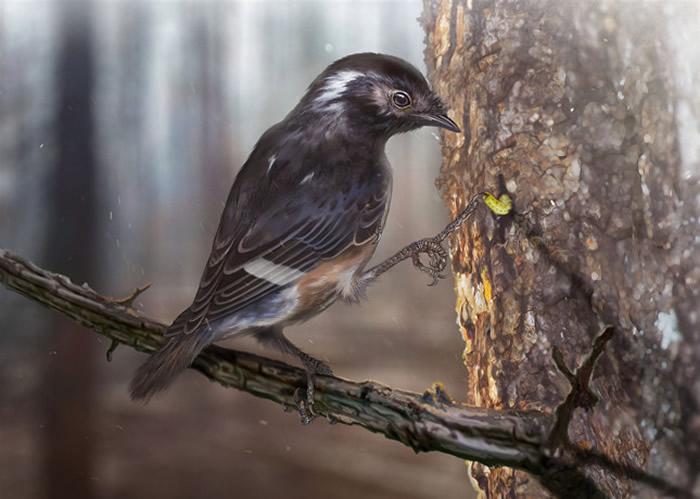 琥珀鸟复原图 (绘图 张宗达)