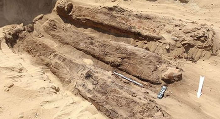 埃及北部发现4000年前放在木棺中的木乃伊
