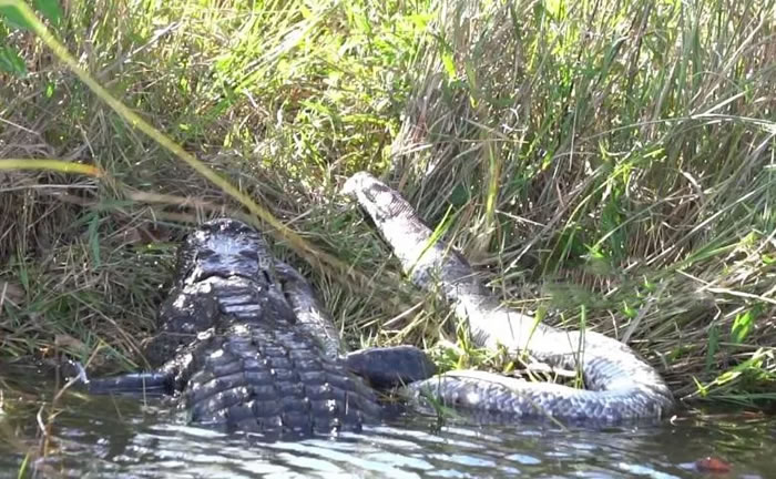 美国摄影师Ewan Wilson在佛罗里达州大沼泽地