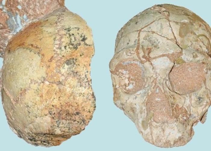 图为Apidima 1(左)及Apidima 2(右)化石。