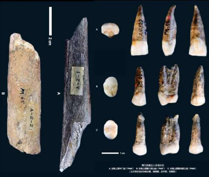 北京猿人头盖骨发现90周年 高星权威解读我们的祖先