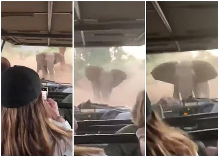 南非野生动物园大象发怒冲击吉普车 司机镇定倒车带游客脱险境