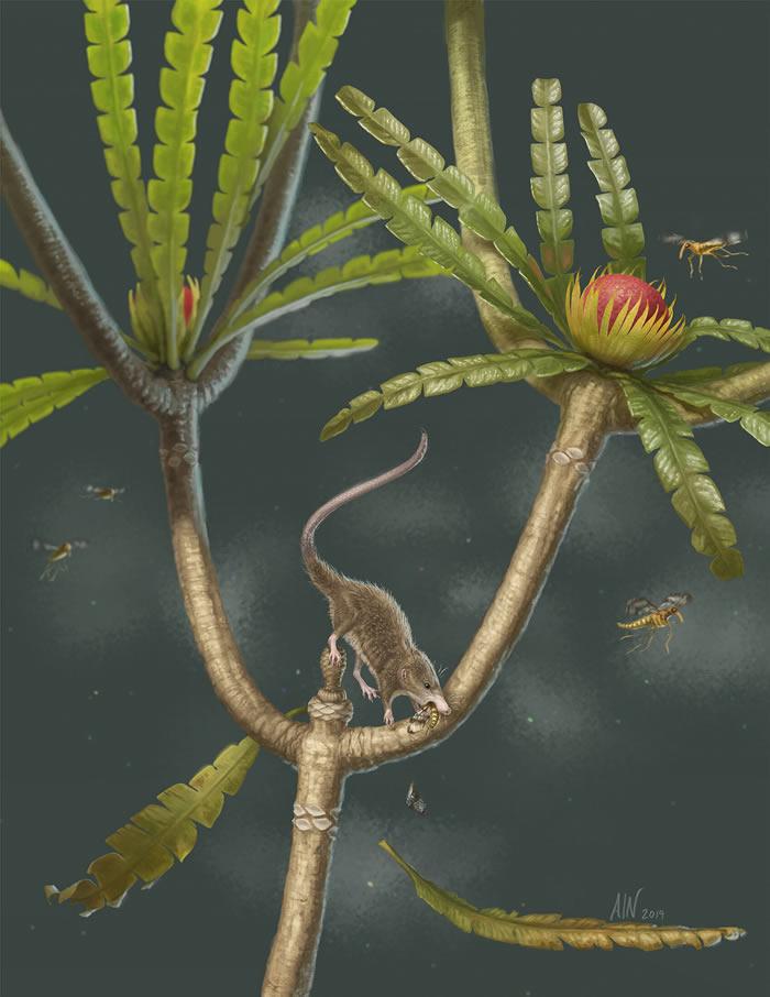 """内蒙古宁城发现的新侏罗纪哺乳型动物""""微小柱"""