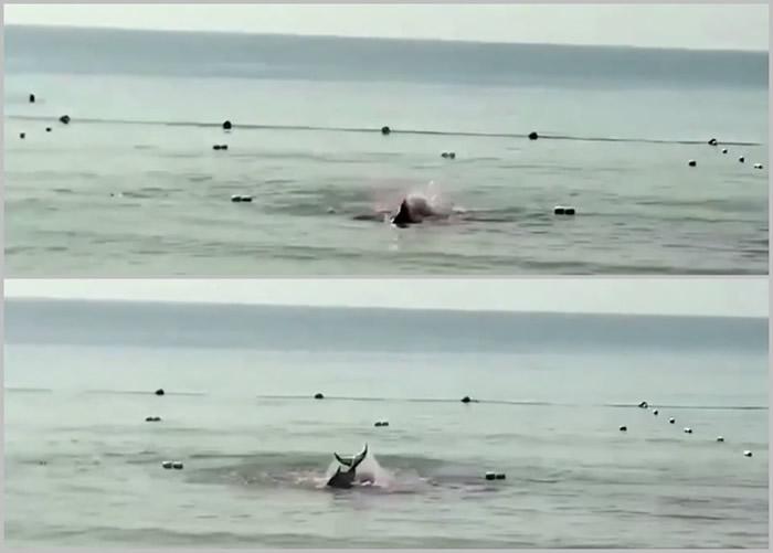 """海南三亚""""大东海出现鲨鱼咬人""""?网警辟谣实为受伤鲸鱼搁浅"""