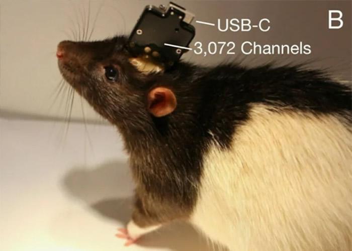 脑部晶片技术在老鼠实验取得成功。