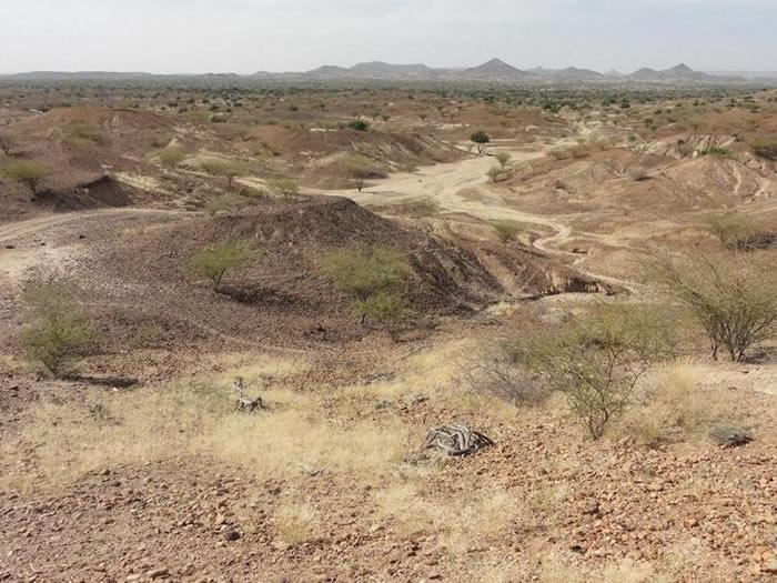 肯尼亚发现420万年前的迷你猴化石Nanopithecu