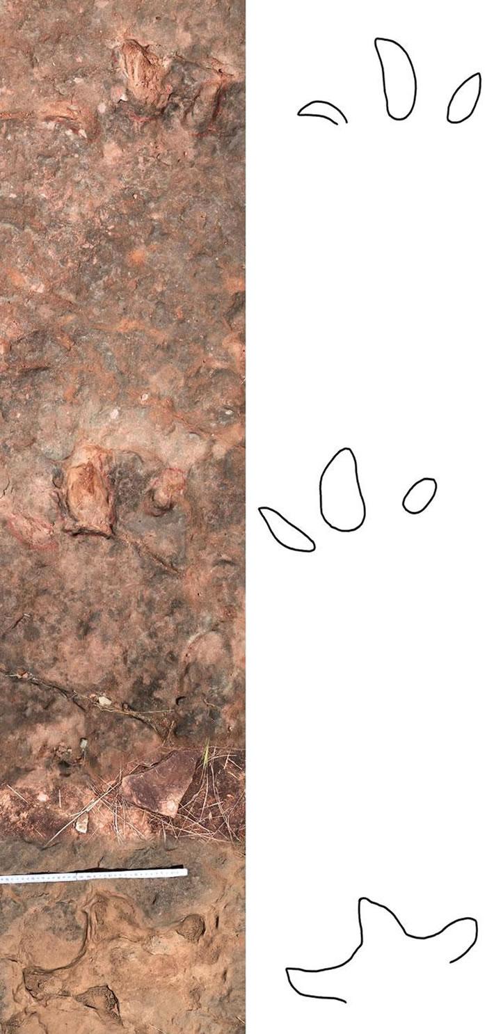 中国云南禄丰发现的李氏滑石板三叉足迹的模式标本