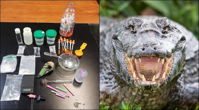 """美国田纳西州警局澄清""""冰毒鳄鱼""""只不过是在开玩笑"""