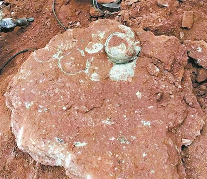 """广东省河源市小学生河边游玩意外发现一窝6500万年前白垩纪晚期""""恐龙蛋""""化石"""