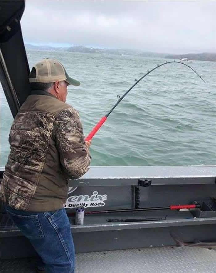 美国渔民在旧金山金门大桥钓鱼时意外钓到一条大白鲨