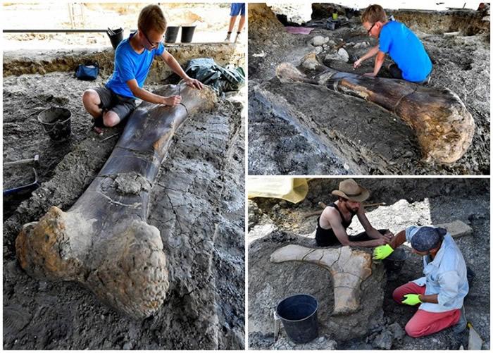 法国夏朗德省出土1.4亿年前蜥脚类恐龙的半吨重股骨
