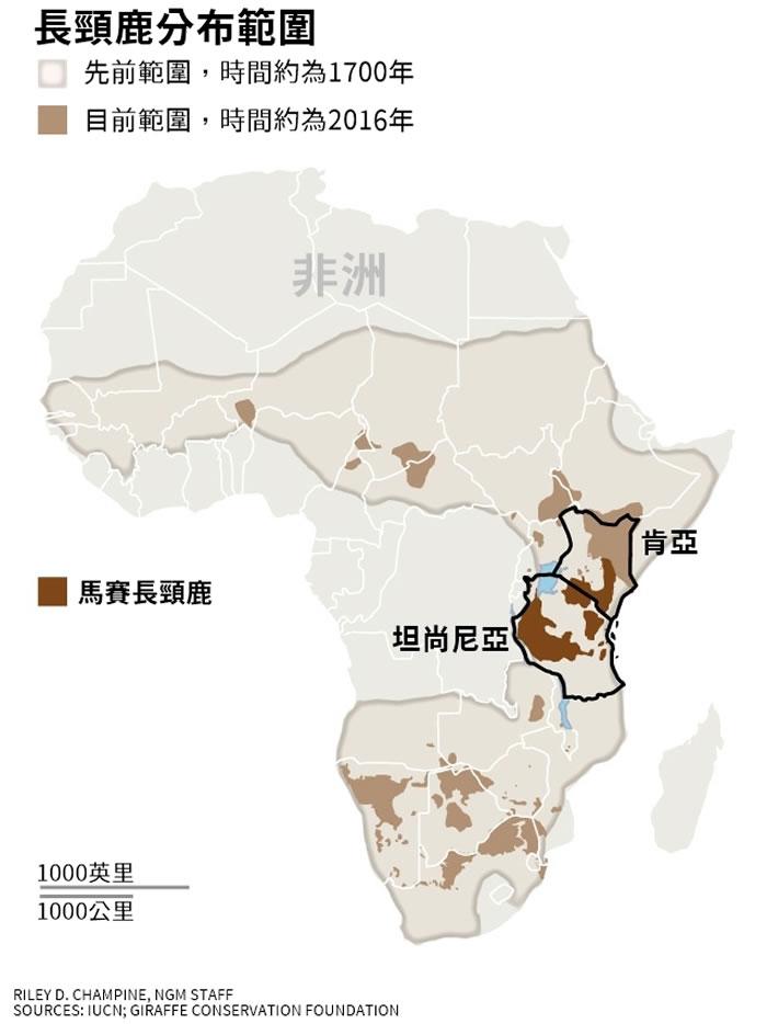 """国际自然保护联盟IUCN宣布:栖息于肯尼亚与坦桑尼亚的""""马赛长颈鹿""""已濒临灭绝"""