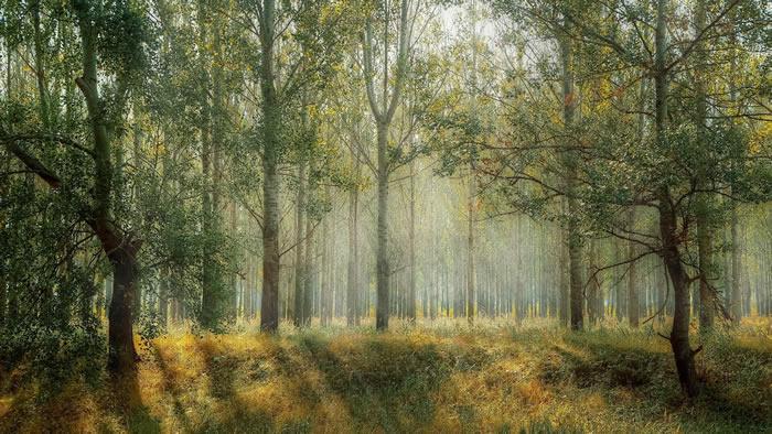 新研究揭示酸雨对大规模森林水循环的长期影响