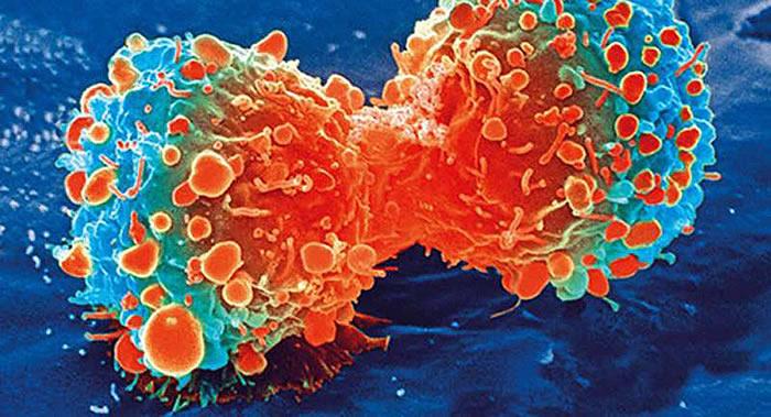 伦敦帝国理工学院科学家创造出人造抗癌细胞