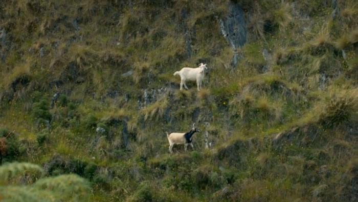 英国知名电视节目主持人戈登·拉姆齐因在纪录片《神秘领域》中射杀并烹饪野山羊遭网友批评